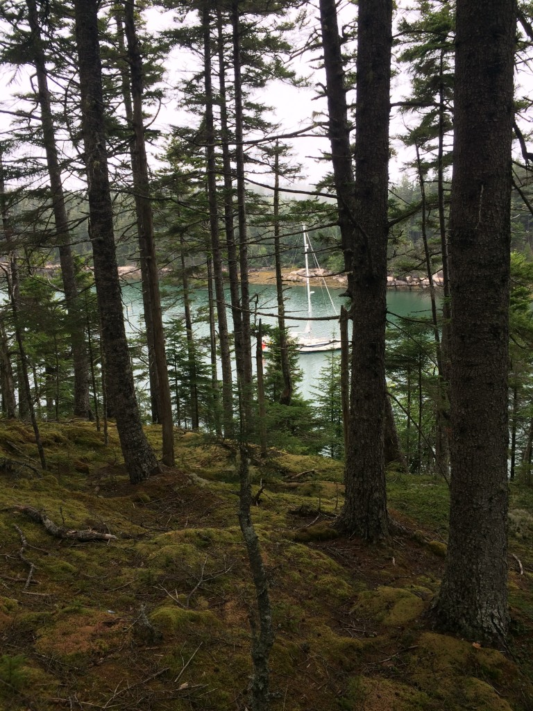 S/V Windleblo through the trees at anchor in Mud Hole, Great Wass Island.