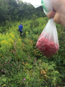 Foraging for wild raspberries!